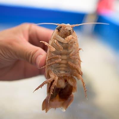 タッチプール(近海の生物)