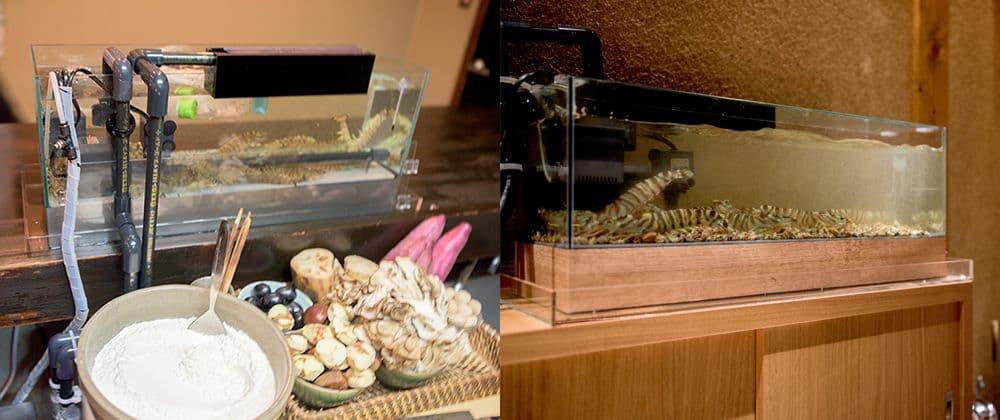 カウンターの上や限られたスペースでの活魚水槽導入事例