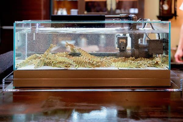 60cm活魚水槽・生簀