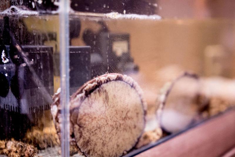 活魚水槽に入ったアワビ