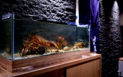 活魚水槽と伊勢海老