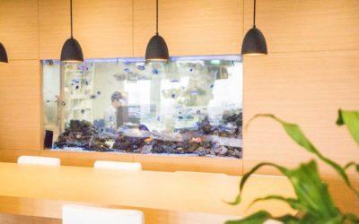 オフィスに設置したアクアリウム
