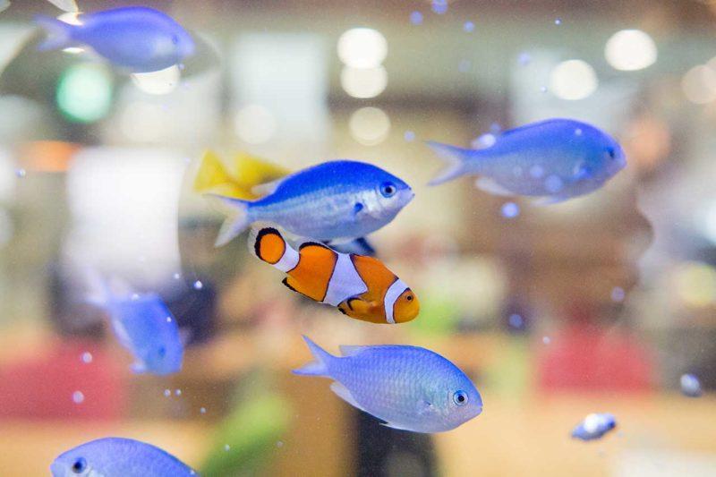 オフィスに設置した海水魚水槽