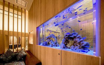 ホテルに設置した海水魚水槽