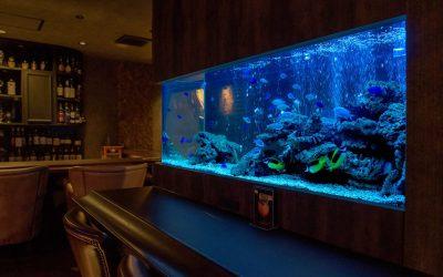 八尾市のBAR様に設置した海水魚水槽
