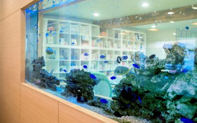 パーティションの役割を持つ海水魚水槽