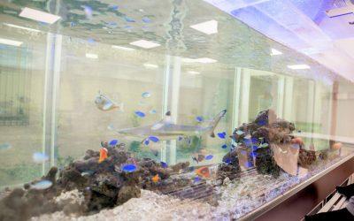 3メートルの海水魚水槽