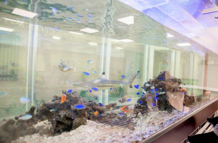 サメとトロピカルな海水魚が暮らす3メートル水槽