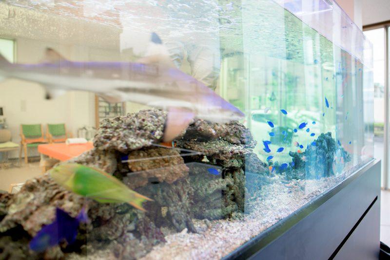 水換え無しの3m海水魚水槽