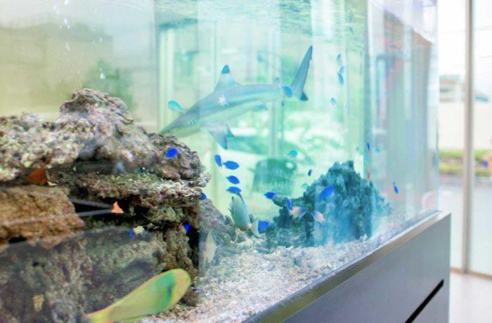 サメと海水魚が暮らす3メートル水槽の設置事例