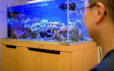 京都のクリニック様に設置した海水魚水槽