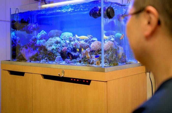 サンゴやイソギンチャクが賑やかな海水魚水槽の設置事例