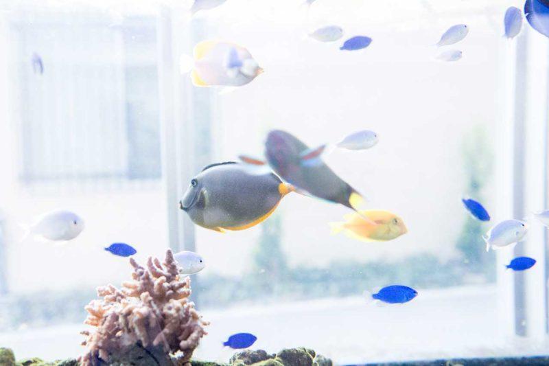 病院に設置した海水魚水槽