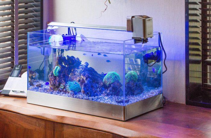 個人宅様に設置した水換え不要の海水魚水槽