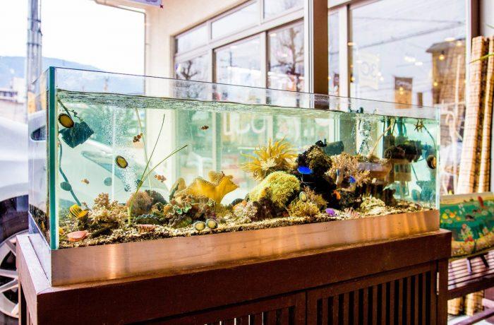 水換え無しで4年以上が経った海水魚水槽の設置事例