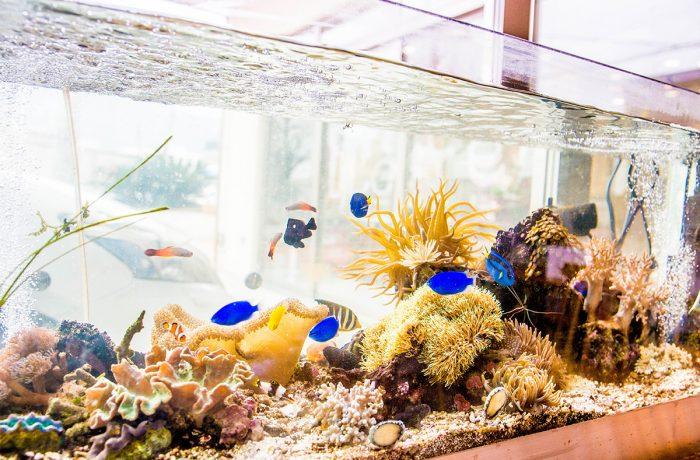 水換え不要の海水魚水槽