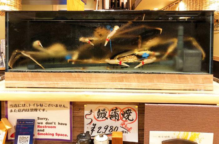 兵庫県城崎に設置した松葉ガニ用水槽