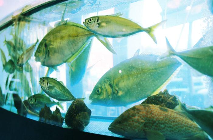 活魚水槽のクーラー選定