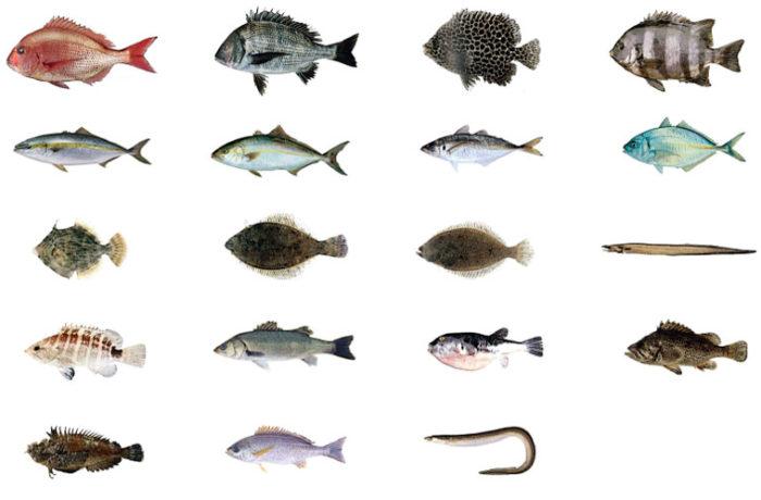 活魚の画像