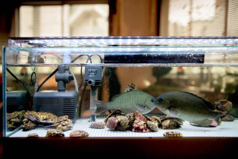 最新特許技術の活魚水槽・業務用生簀