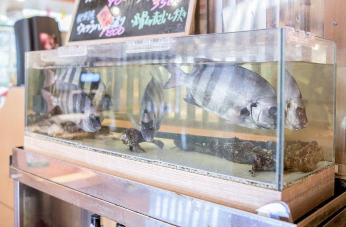 生簀水槽 活魚水槽