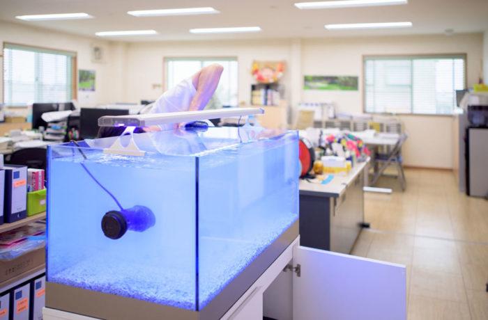 大阪 岸和田市 海水魚水槽の設置 メンテナンス「オフィス様」