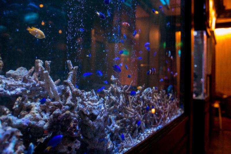 大型の海水魚水槽 水換え不要