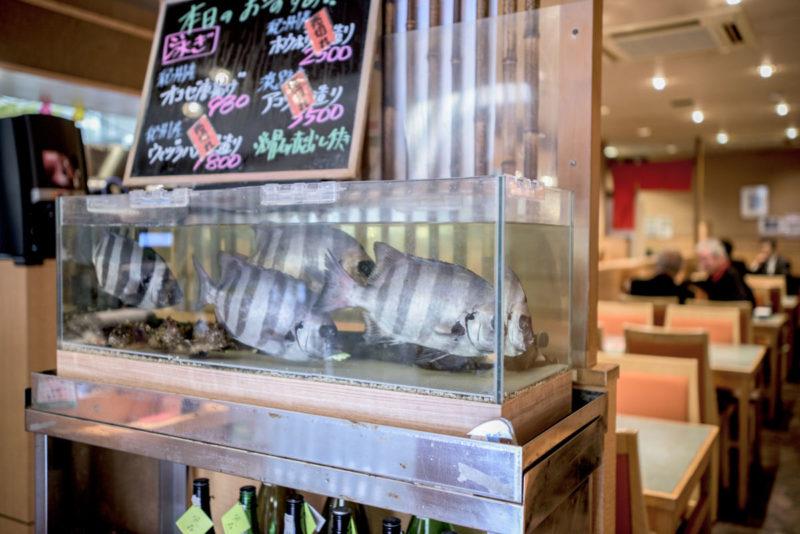 生簀水槽 活魚水槽 季節の活魚
