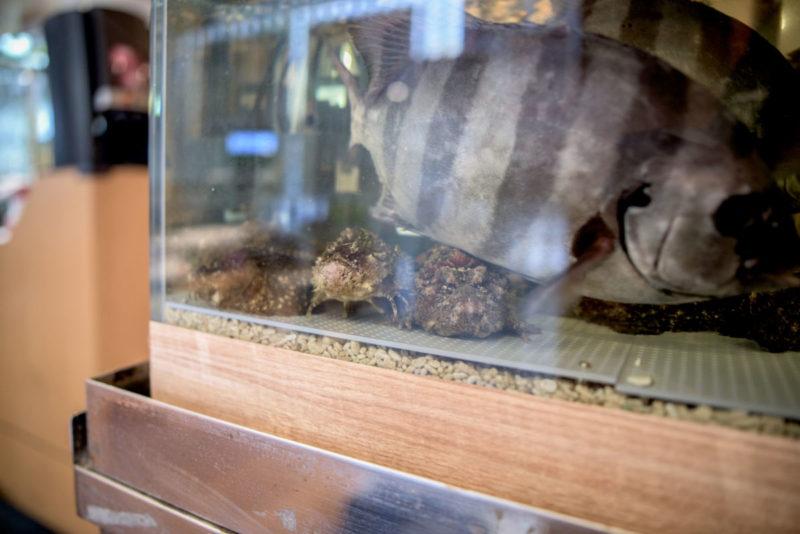 オコゼと石鯛が入った生簀水槽