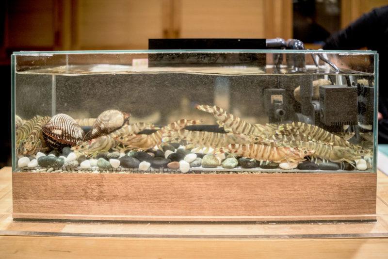 車海老の生簀水槽 寿司屋さん