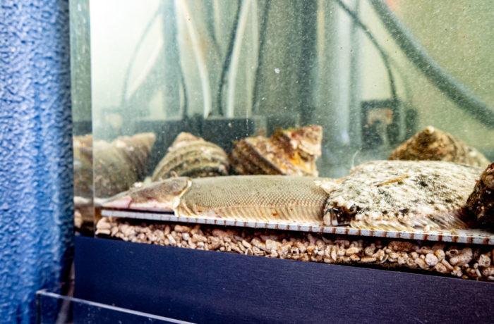 季節の魚介類が入る生簀水槽