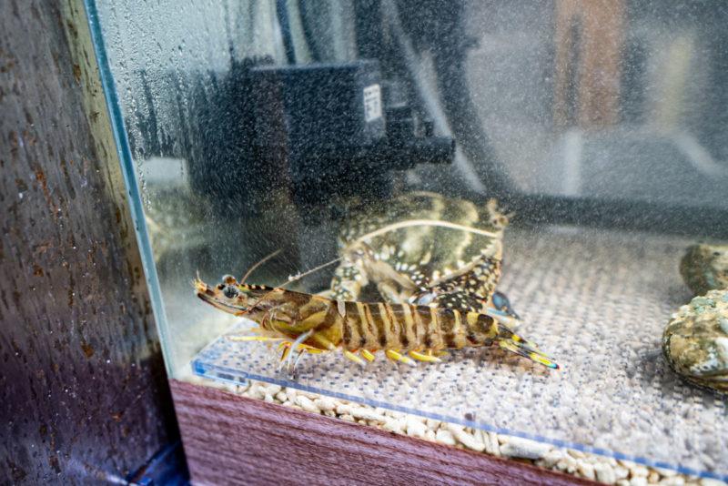 活魚水槽の車海老とワタリガニ